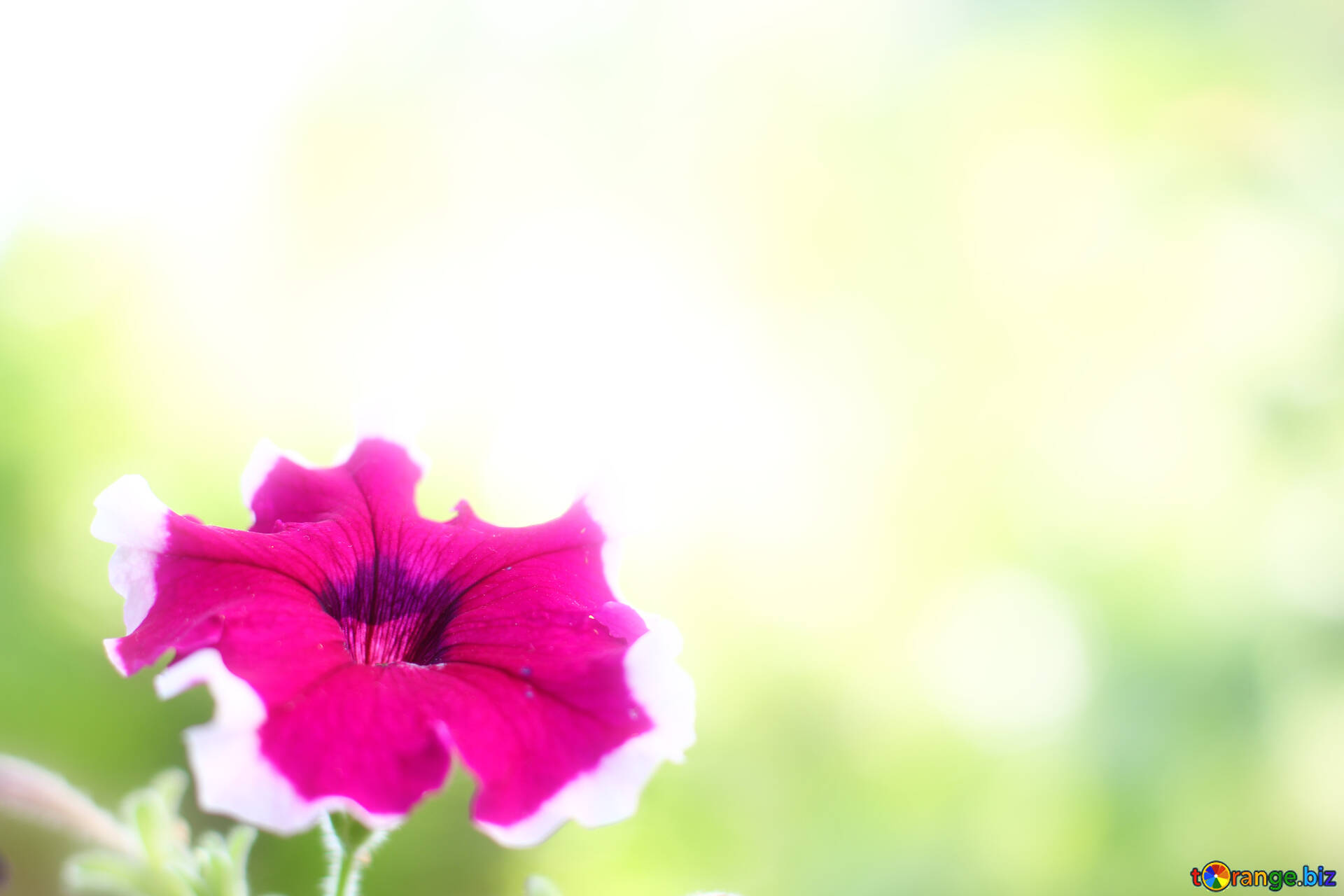 Background With Summer Flowers Beautiful Background With Flower