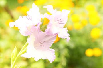Sfondo con fiore №33739