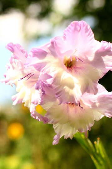 Flowers №33773