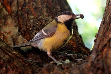 Bird Bird №33114