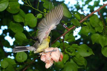 Bird eating suet №33112
