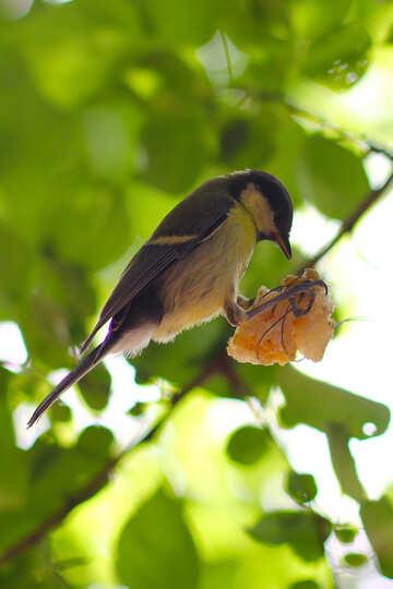 Bird eating suet №33136