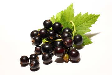 Berries of black currant isolated №33158