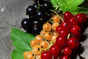 Ribes colorata №33173
