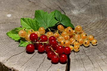 Ribes, rosso e bianco №33181