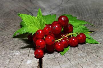 Köstliche Rote Johannisbeere №33233