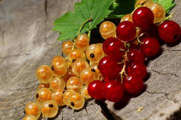 Saftige Beeren von Johannisbeere №33184