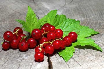 Juicy red currants №33235