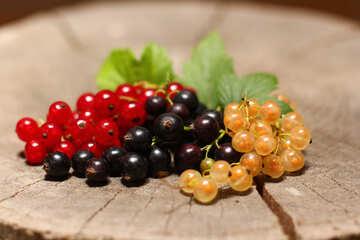 Ribes rosso nero bianco №33144