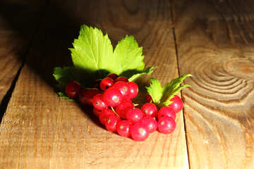 Red currant in direct sunlight №33210