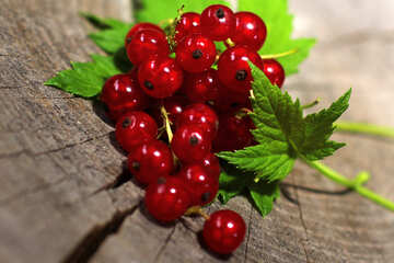 Red currant with leaf №33244