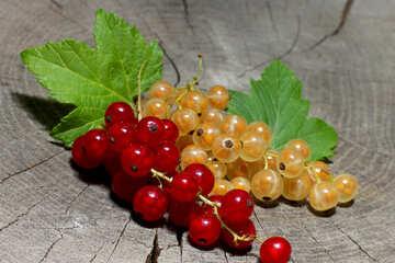 Rote und weiße Johannisbeere Beeren №33175