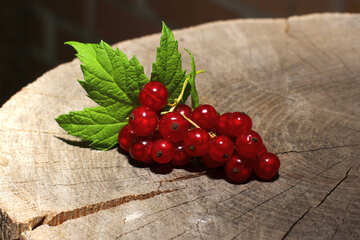Sprig of red currant №33220