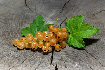 Ribes bianco №33176