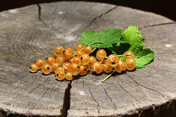 Ribes bianco con foglia №33185
