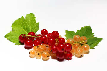 Currant isolated