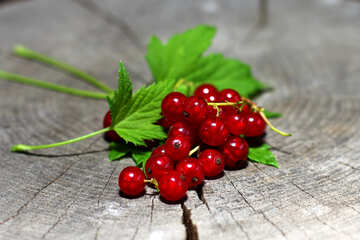 Red currant  №33237