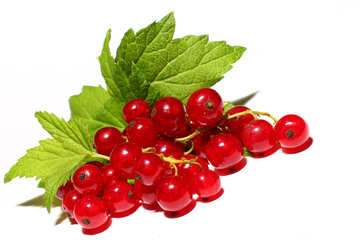 Red currant isolated №33229