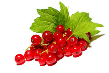 Red currant isolated on white background №33228