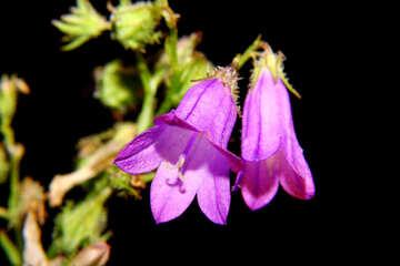 Flower Bell №33341