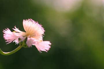 Flower background №33437