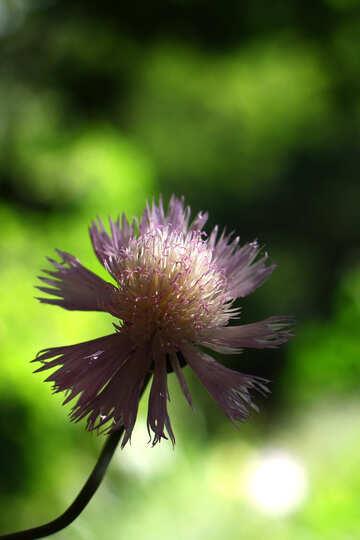 Beautiful delicate flower №33428