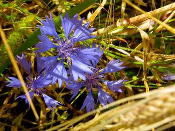 Una flor de hierba №33327