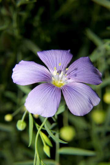 Flower №33414