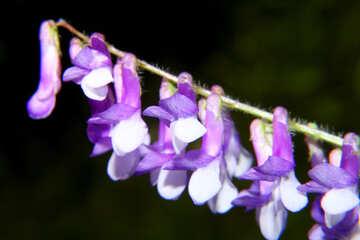 Flowers bells №33369