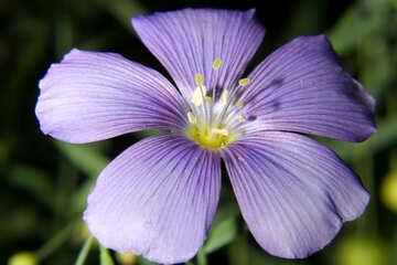 Beautiful flower №33412
