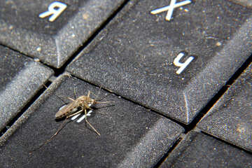 Mosquito on computer keyboard №33864