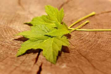Black currant leaf №33247