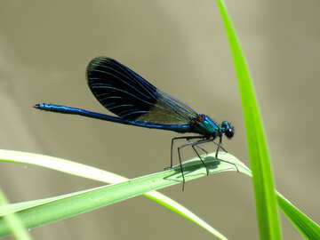 A beautiful dragonfly №33271