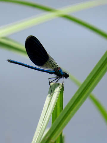 Dragonfly with colored wings №33261
