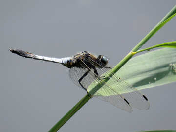 Dragonfly on the grass №33263