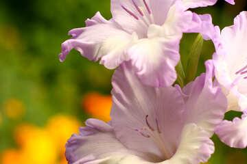 Sfondi bellissimi fiori №33738
