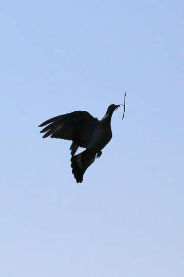 The bird builds nest №33794