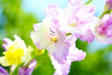 Beautiful image of flower №33487