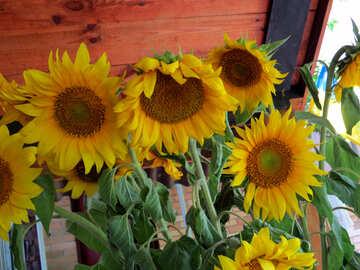 Blumen im Strauß von Sonnenblumen №33049