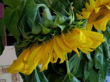 Rustikale Sonnenblumen-Strauß №33053