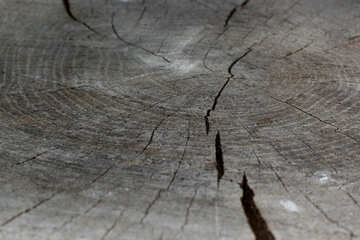 The texture of the cut wood dark №33208