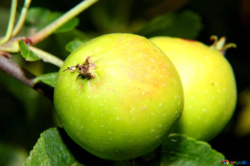 Green Apple №33608