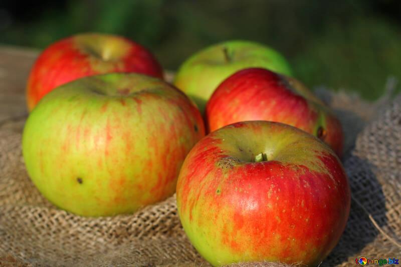 Cosecha de manzanas №33561