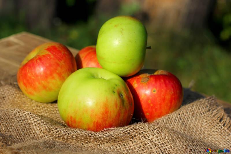 Season apples №33550