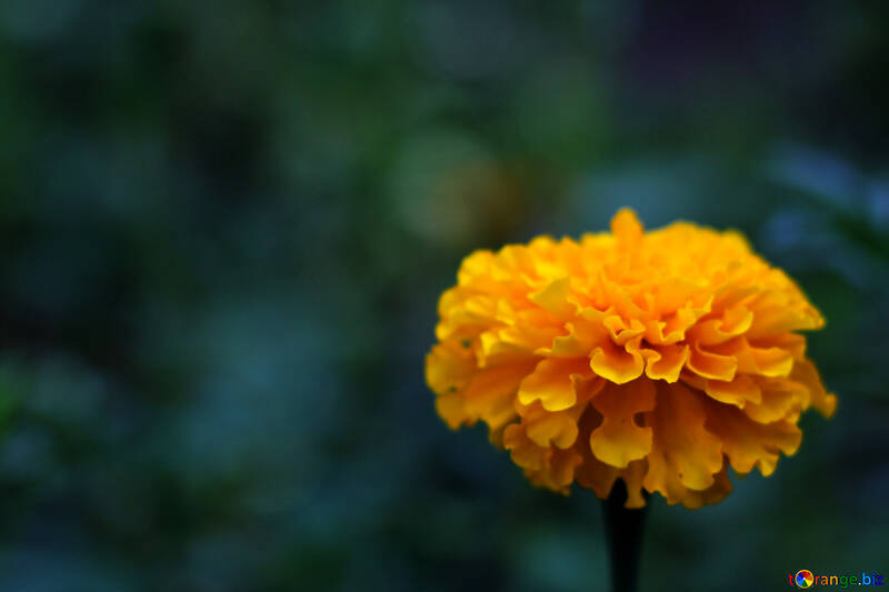 Hermoso fondo con flor №33459