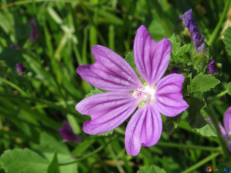 Hermosas flores silvestres para el fondo de la cuchara №33335