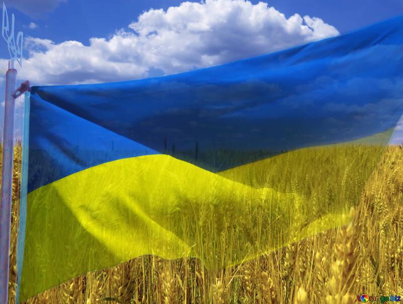 La bandiera dell`Ucraina №33620