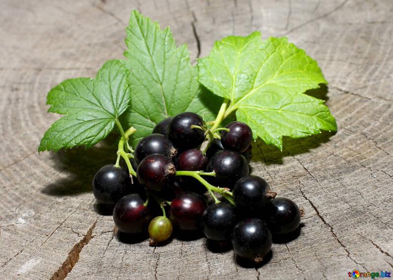 Beeren der schwarzen Johannisbeeren №33155