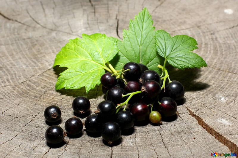 Ribes nero con foglie №33154