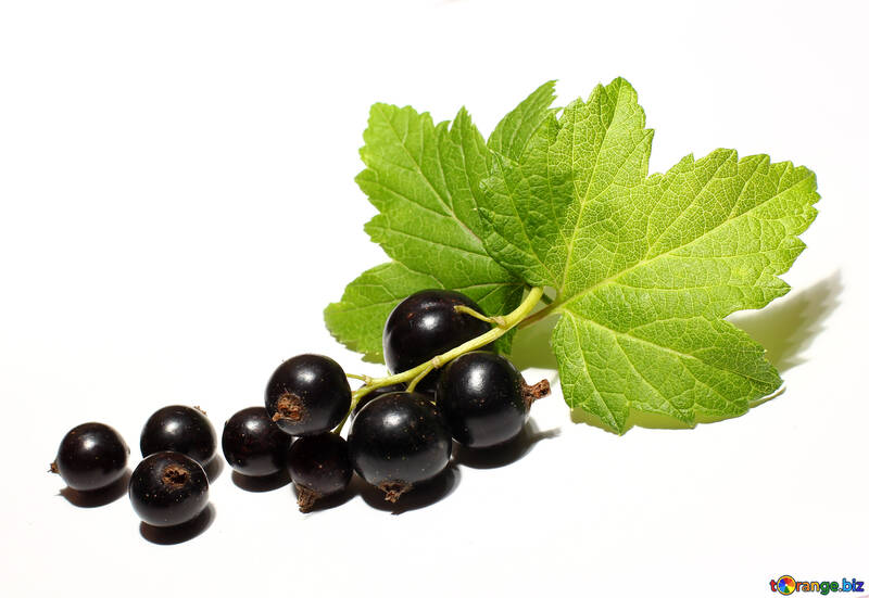 A bunch of black currant isolated №33160